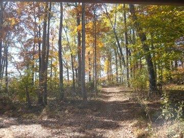 Peace on a trail